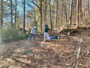 tree removal Biltmore village